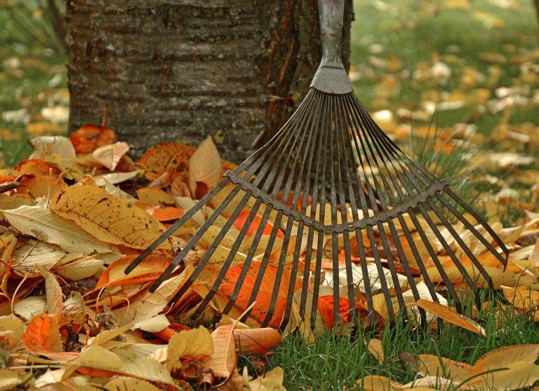 L'entretien de son jardin en automne