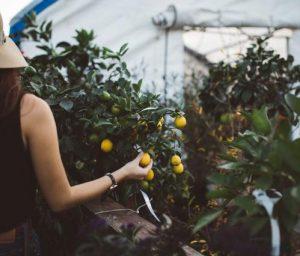 Cultiver fruits dans son jardin